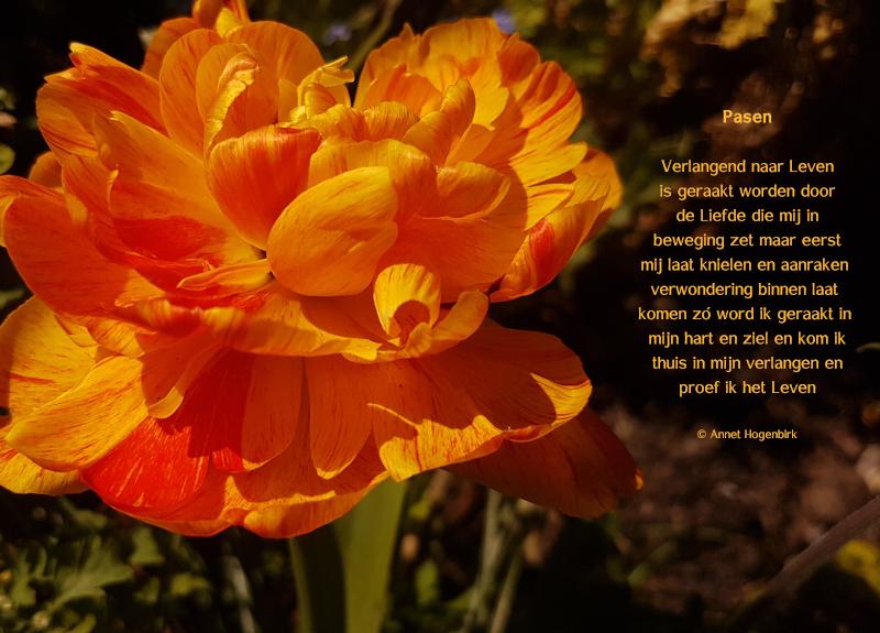 Pasen gedicht Annet Hogenbirk - verlangen - Liefde - Leven - verwondering